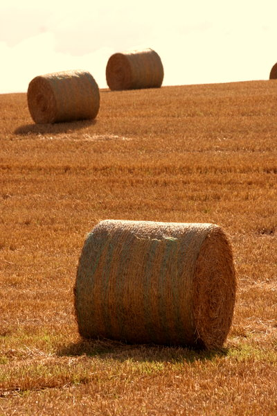 Hay at Harvest 2: http://www.scottliddell.n ..