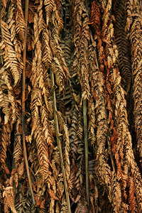 Dried fern texture