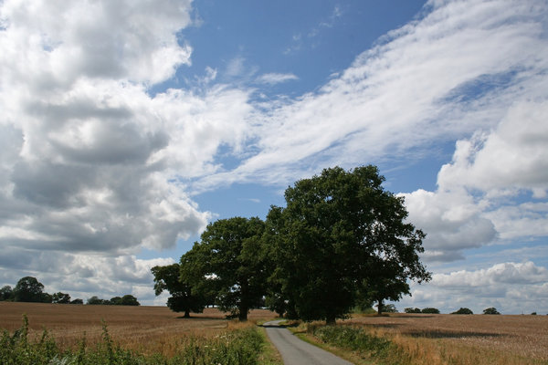 Rural road: A rural road in West Sussex, England, in summer.