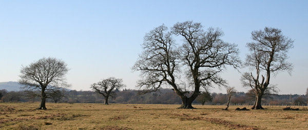 Characterful trees: