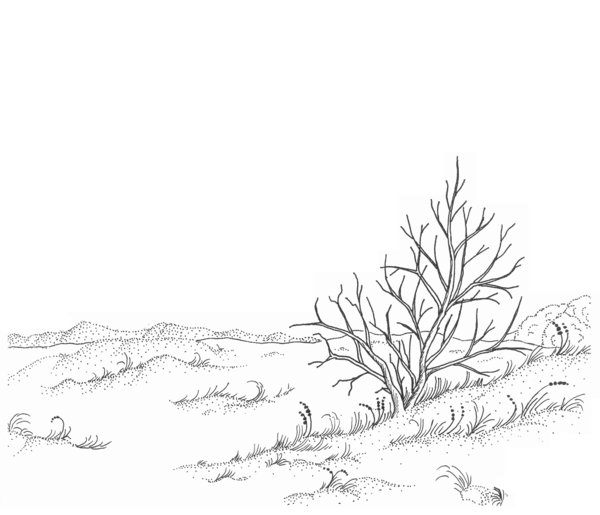 winter landscape drawing: This is one of my ink drawings