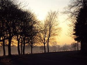 Dawn in Newsham Park