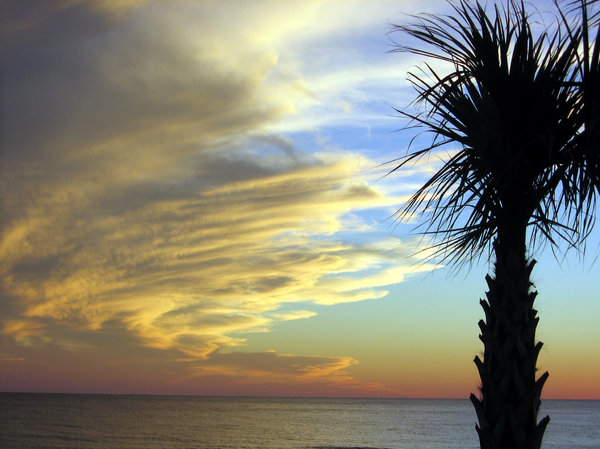 Palm Set: Evening over Gulf of Mexico