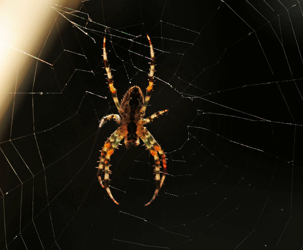 Wood Spider 5: Wood Spider just hangin around taken with my Nikon 105mm