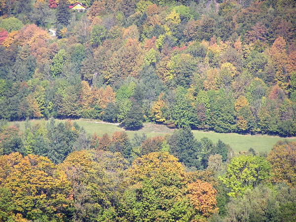 From a hill: A view from a hill - forest in autumn.