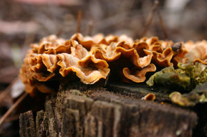fungus 1: fungos in rotten wood