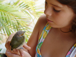 > Bird_Girl 1: Passarinho e Criança, Pirenópolis, Goiás, BrasilBird and Girl, Pirenópolis, Goiás, BrazilIt's free, however will be possible credits the photo.by Marcelo TerrazaFoto livre, porém se for possível credite a foto. Marcelo TerrazaComentários e votos s