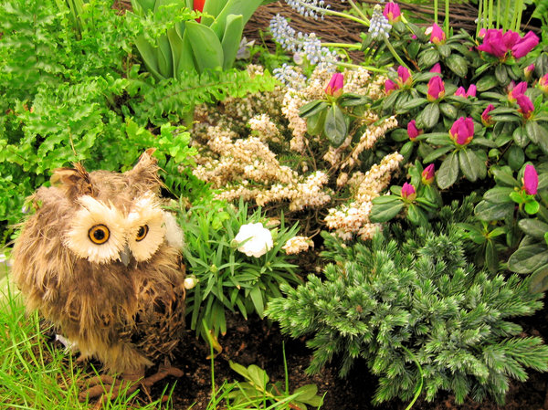 owl and plants still life
