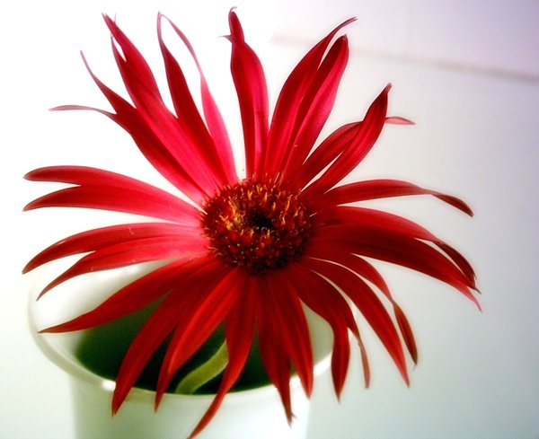 Red Flower in Vase