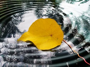 Leaf Afloat: A fallen leaf floats on the water's surface. You may prefer:  http://www.rgbstock.com/photo/dKTuf9/An+Autumn+Thing+1  orhttp://www.rgbstock.com/photo/o3YoGIO/An+Autumn+Thing+2: