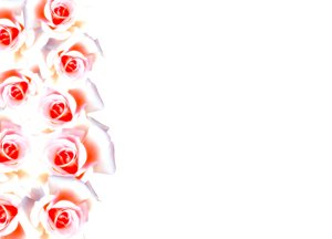 Floral Border 32: Floral border of pink and white roses on blank page. Lots of copyspace. No redistribution of these images is allowed without permission. Not for sharing or sale on any other site.