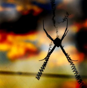Spider Sunset: Sillhouette of a spider against a spectacular sunset. He was happily living on my front verandah.