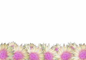 Flower Border 1: Pretty border of flowers. Photo and graphic. None of my images may be redistributed.