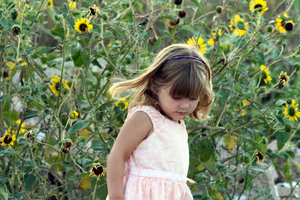 Sunflower Child: child walking next to a patch of sunflowers