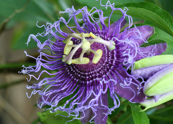 Alien Purple Flower