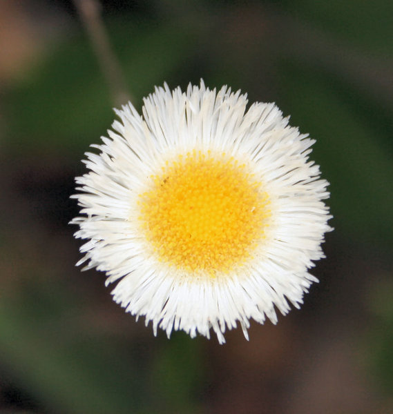 White and yellow flower: Great little flower