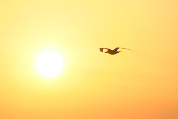 Sunrise with Seagull: Sunrising over Galveston Bay in Texas