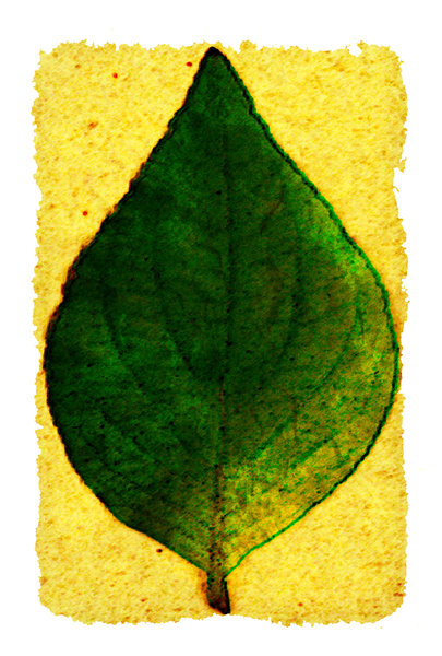 Leaf Paper: Leaf on rough edge paper.Please visit my stockxpert gallery:http://www.stockxpert.com ..
