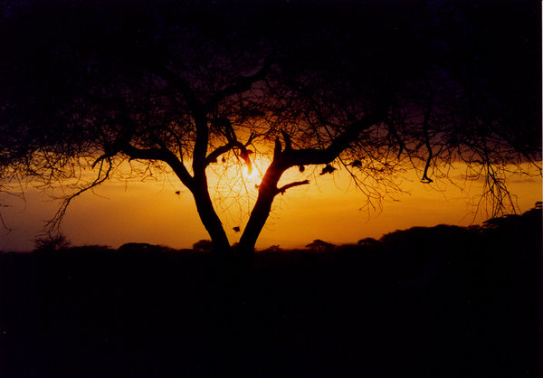 africa sunset 2: Sunset on Amboseli National Park