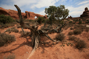Old West 5: Landscape od Arches National park