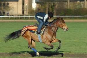 Racehorse 2: Racehorse galloping at Newmarket, England