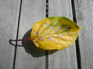 Yellow Leaf: Summer was hot and the plants suffer from dryness. Then they could get ill.