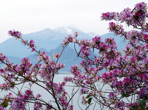Spring in Antalya: Blossoms an snowy mountains