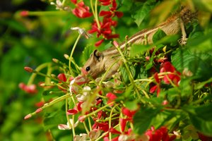 Squrriel: squirrel eating sprout of flowers in bus station, Delhi, India