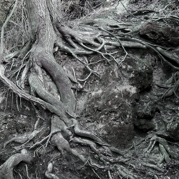 roots 2: roots on stone