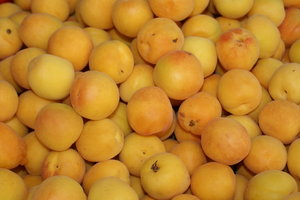 Close up on apricots