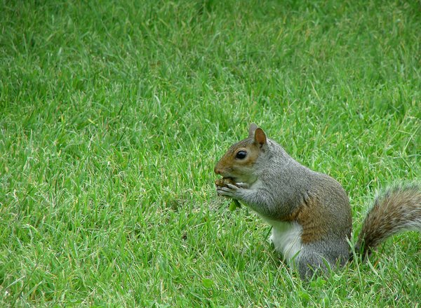 hungry squirrel: squirrel