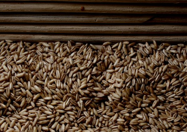 grain: wheat grain in a basket