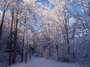 Beauty of snow 5: some pictutres of a recent snowfall in our area