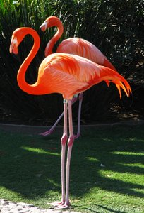 Flamingo 19: No description