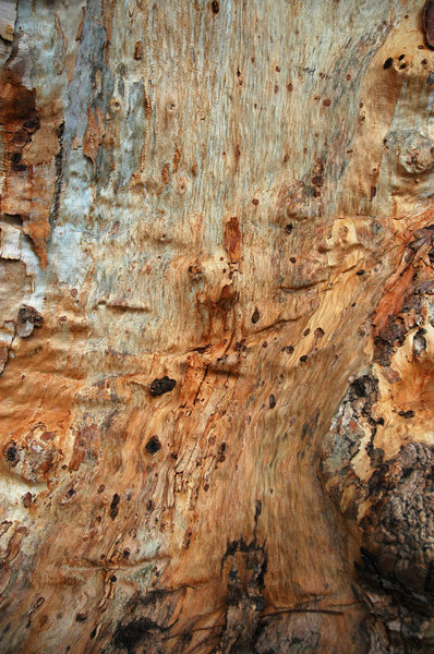 Bark 4: Tree bark texture or background shots.NB: Credit to read