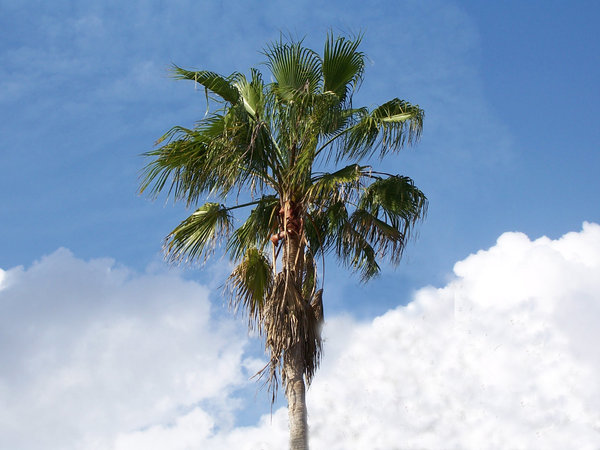 Palm Tree: My son took this picture, i think he wants to follow in his grandpa's footsteps!!
