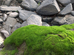 Rock Gathers Moss: Rocks at a cool dry river bed, Bathurst NSW Australia