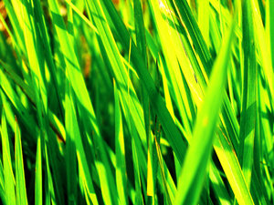 Green Explosion