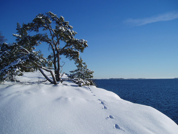 Traces in the snow: A sunny day by the sea