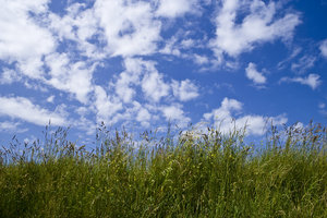 Grass and Sky: Green grass against a blue sky full of fluffy white clouds.