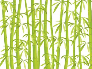Bamboo: Bamboo illustration.