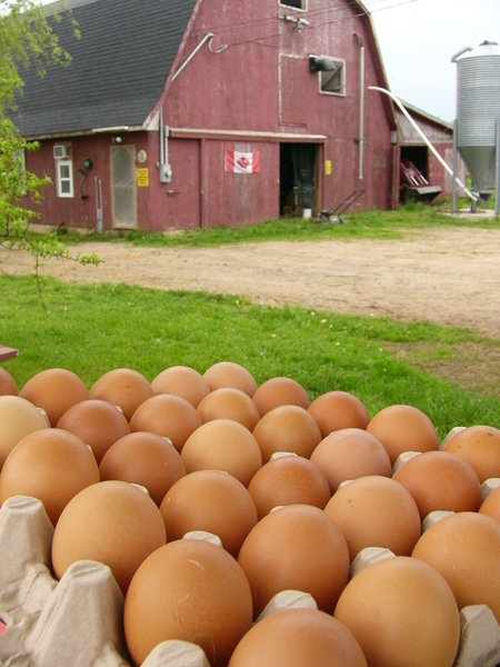 Farm Fresh Eggs: Fresh Canadian Eggs, Kingsport, NS, Canada