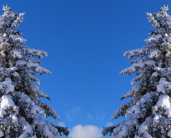 Winter Wonderland II: Early morning after a heavy snow (mirrored image)