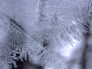 Frosty Window: It  is so cool to see how the ice frost creates patterns like fingers on a window,.