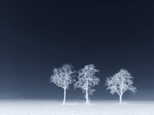 Blue trees: 3 trees in heavy fog. I made the photo negative to give it an icey feeling. Invert it again to get the positive sepia-coloured version. :-)