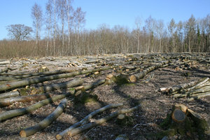 Felled woodland
