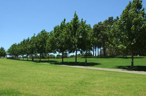 tree path: tree lined path through community park