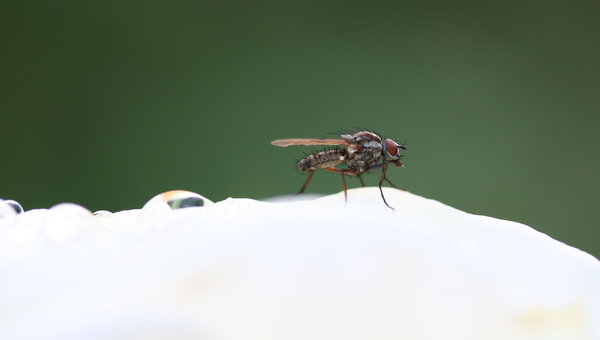 flyin, fly out: different varieties of flies