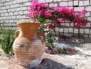 flower and jug