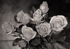 roses: colourless.